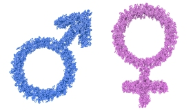 Female and male gender symbols