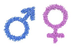 Female and male gender symbols