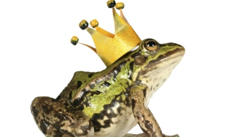 A frog wearing a golden crown