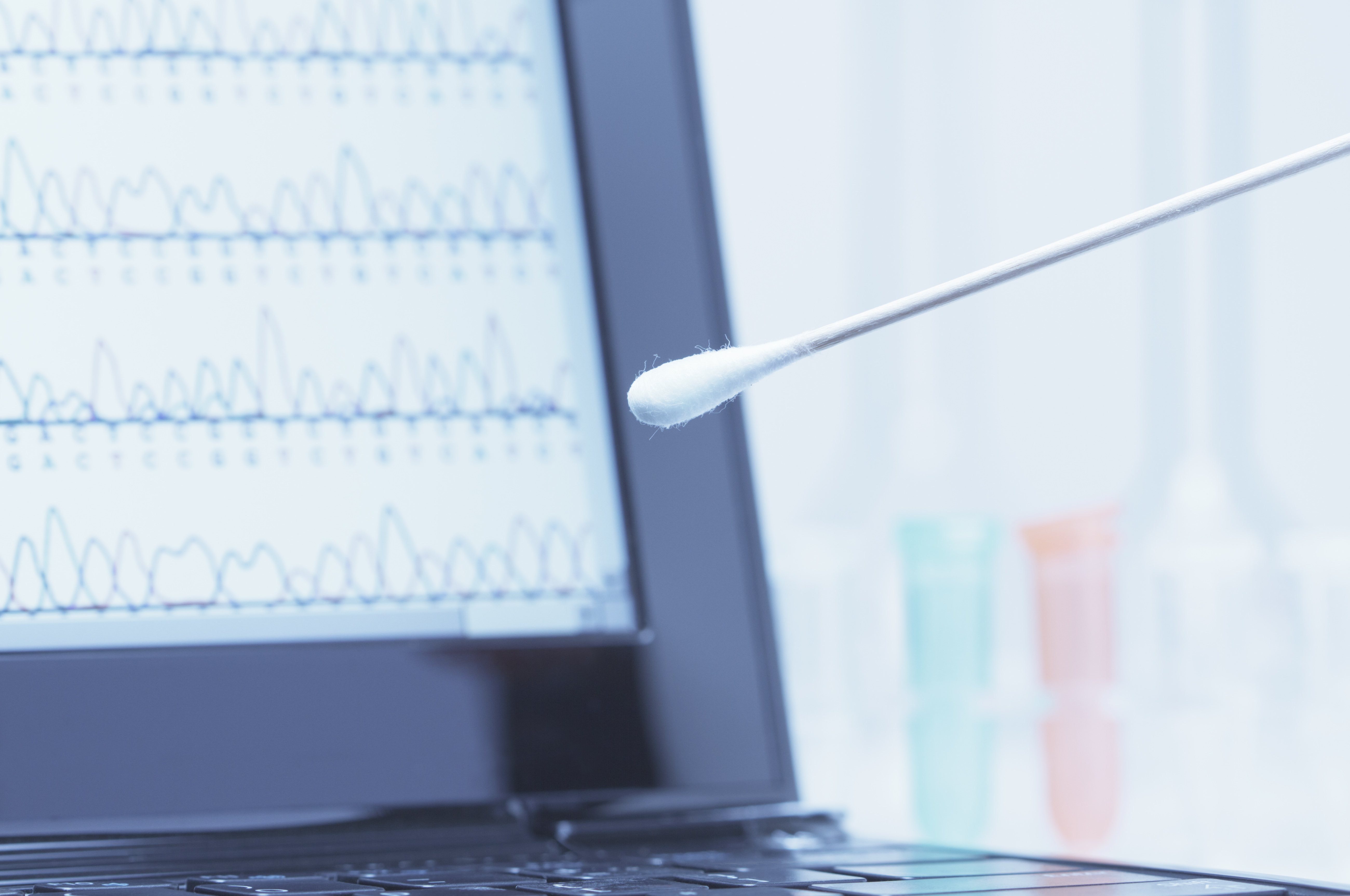 Cotton swab with saliva in front of a laptop screen that displays results of automated DNA sequencing