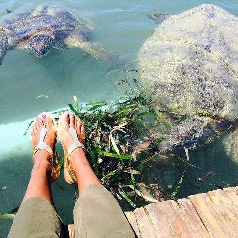 Sea turtles were among the amazing sights at each stop.