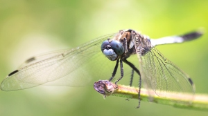 Dragonfly at the edge of stem.